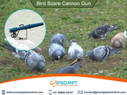 Save your Farm from Threats of birds with Bird Scarring Devices