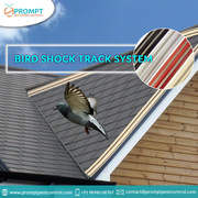 Make Your Property Bird Free with Prompt Pest Control Services