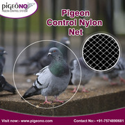 Pigeon Control Services,  India | Pigeono.com