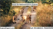 Sasan Gir National Park - History,  Geography,  Eco Tourism,  Conservatio