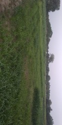 Agriculture land nearest of main canel of the Narmada
