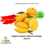 Buy Best Quality Organic Alphonso Mango At Orgpick