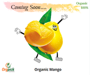 Purchase Online Mango|Organic Mangoes