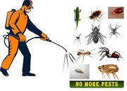 Wood Borer Pest Control Company In Ahmedabad,  Gujarat,  India